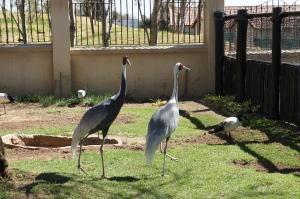 Птичий сад